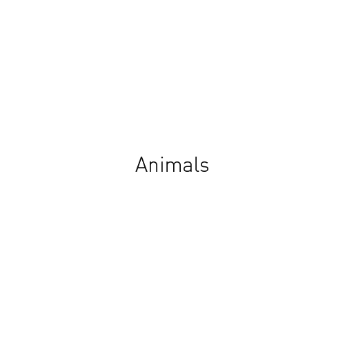 http://www.georges-pacheco.com/files/gimgs/45_animals.jpg